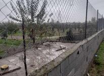 باغ 5000 متر در آمل در شیپور-عکس کوچک