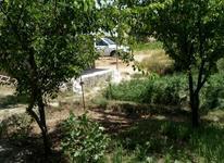سه باغ ویلایی گردو و انگور و 7000 متر زمین با آب در شیپور-عکس کوچک