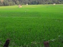 زمین مسکونی 400 متر در پهنه کلا در شیپور
