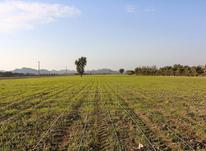 فروش زمین 1588 متر در صفادشت با سند در شیپور-عکس کوچک