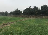 زمین مسکونی و باغ 2000 متر در آمل در شیپور-عکس کوچک