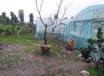 باغ ویلا 5000 متر داخل بافت در آمل در شیپور-عکس کوچک