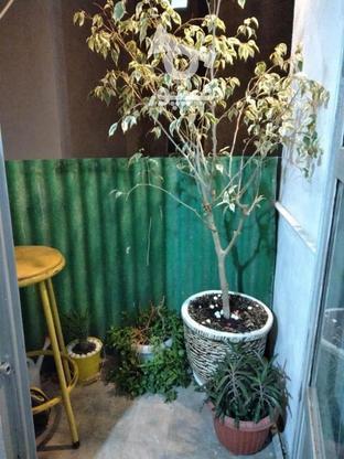 فروش آپارتمان 60 متر در بریانک در گروه خرید و فروش املاک در تهران در شیپور-عکس3