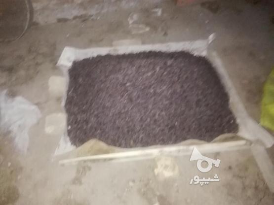 کشمش بیدانه در گروه خرید و فروش خدمات و کسب و کار در قزوین در شیپور-عکس3