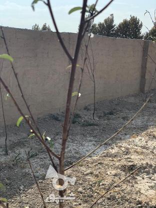 فروش زمین کشاورزی 300 متر در شهریار در گروه خرید و فروش املاک در تهران در شیپور-عکس2