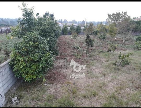 فروش فوری زمین مسکونی  در گروه خرید و فروش املاک در مازندران در شیپور-عکس2
