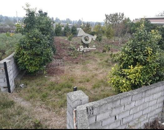 فروش فوری زمین مسکونی  در گروه خرید و فروش املاک در مازندران در شیپور-عکس1