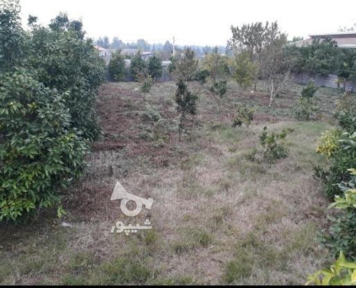 فروش فوری زمین مسکونی  در گروه خرید و فروش املاک در مازندران در شیپور-عکس4