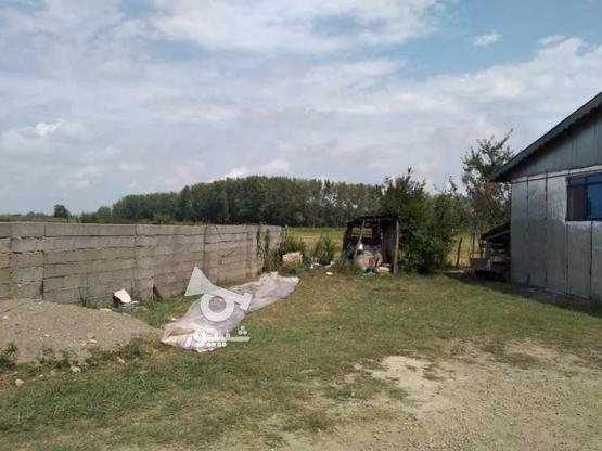 فروش ویلا 700 متر در رضوانشهر در گروه خرید و فروش املاک در گیلان در شیپور-عکس1