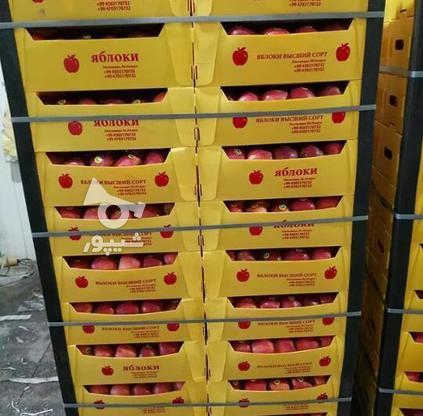 نبشی پلاستیکی بسته بندی پالت،تسمه بسته بندی ودستگاه تسمه کش در گروه خرید و فروش خدمات و کسب و کار در فارس در شیپور-عکس2