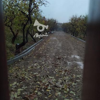 فروش زمین کشاورزی 1000 متر در شهریار در گروه خرید و فروش املاک در تهران در شیپور-عکس1