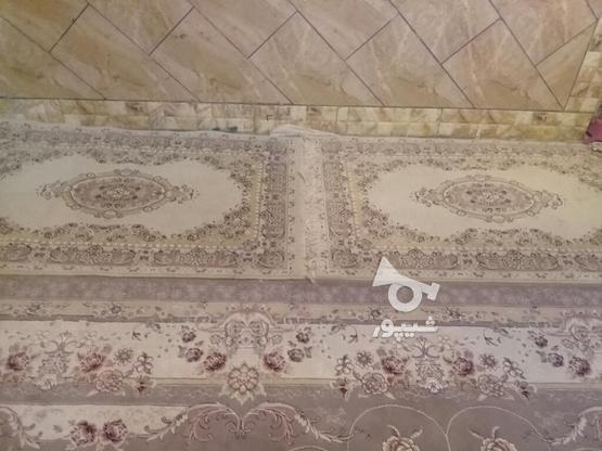 قالی وقالیچه در حد نو در گروه خرید و فروش لوازم خانگی در کرمان در شیپور-عکس4