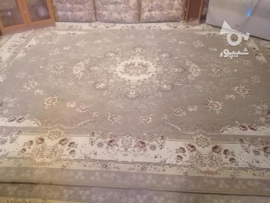 قالی وقالیچه در حد نو در گروه خرید و فروش لوازم خانگی در کرمان در شیپور-عکس1