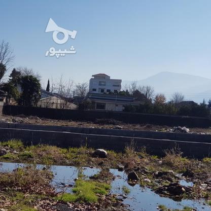 فروش زمین مسکونی 232 متر در عباس آباد در گروه خرید و فروش املاک در مازندران در شیپور-عکس1