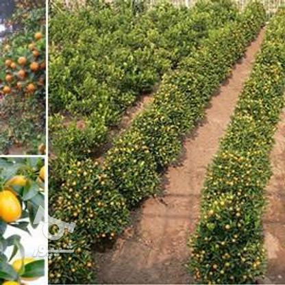 فروش زمین کشاورزی 7000 متر در تنکابن در گروه خرید و فروش املاک در مازندران در شیپور-عکس2