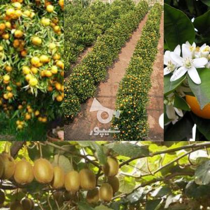 فروش زمین کشاورزی 7000 متر در تنکابن در گروه خرید و فروش املاک در مازندران در شیپور-عکس1
