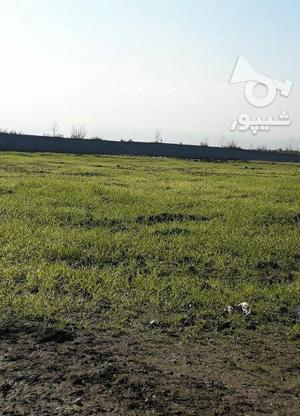 فروش زمین کشاورزی 1500 متر در آمل در گروه خرید و فروش املاک در مازندران در شیپور-عکس4