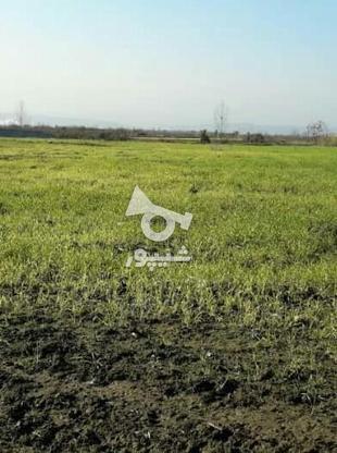 فروش زمین کشاورزی 1500 متر در آمل در گروه خرید و فروش املاک در مازندران در شیپور-عکس2