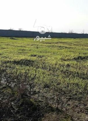 فروش زمین کشاورزی 1500 متر در آمل در گروه خرید و فروش املاک در مازندران در شیپور-عکس3
