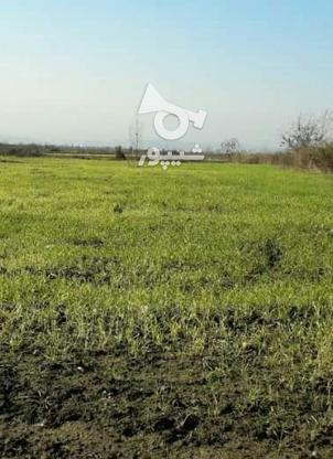 فروش زمین کشاورزی 1500 متر در آمل در گروه خرید و فروش املاک در مازندران در شیپور-عکس1