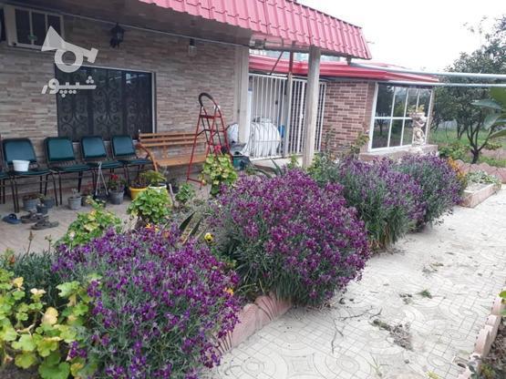 خونه باغ طلایی دارای آب برق گاز و گلهای زینتی، کروا در گروه خرید و فروش املاک در مازندران در شیپور-عکس4