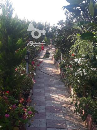 خونه باغ طلایی دارای آب برق گاز و گلهای زینتی، کروا در گروه خرید و فروش املاک در مازندران در شیپور-عکس3