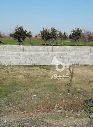 فروش زمین مسکونی 213 متر در آمل در گروه خرید و فروش املاک در مازندران در شیپور-عکس3