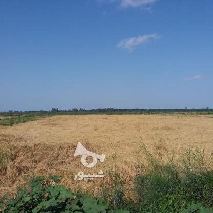 فروش زمین کشاورزی 4200 متر در لنگرود در گروه خرید و فروش املاک در گیلان در شیپور-عکس1
