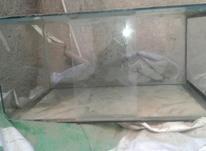 اکواریوم و ماهی در شیپور-عکس کوچک