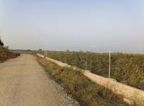 فروش باغ 6000 متری نزدیک دریا  در شیپور-عکس کوچک