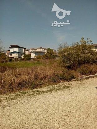 فروش زمین مسکونی 276 متر سند دار و خوش نقشه در چالوس در گروه خرید و فروش املاک در مازندران در شیپور-عکس3