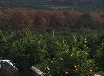 فروش یه قطعه زمین شهرکی با ویوی عالی جنگلی  در شیپور-عکس کوچک