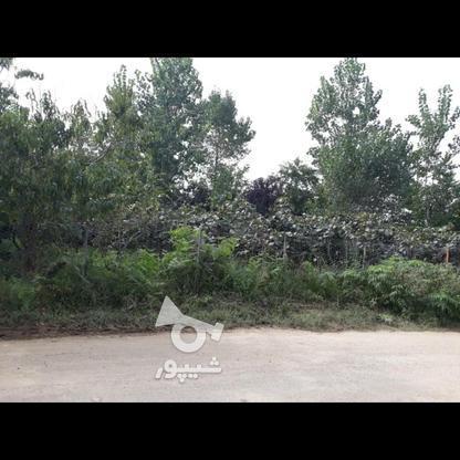 فروش یامعاوضه باغ میوه603 متر در تالش در گروه خرید و فروش املاک در گیلان در شیپور-عکس2