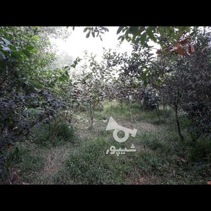 فروش یامعاوضه باغ میوه603 متر در تالش در گروه خرید و فروش املاک در گیلان در شیپور-عکس3