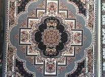فرش 9متری 700شانه  در شیپور-عکس کوچک