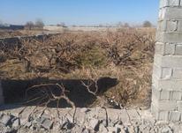فروش زمین کشاورزی 300 متر در شهریار در شیپور-عکس کوچک