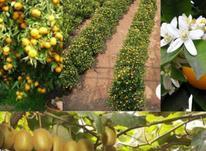 فروش معاوضه باغات در تنکابن در شیپور-عکس کوچک
