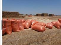 فروش کاه نرم گندم در شیپور-عکس کوچک