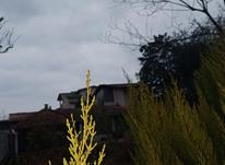 فروش زمین مسکونی 700 متر در سلمان شهر در شیپور-عکس کوچک