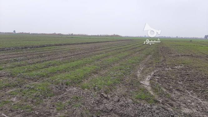زمین کشاورزی(خشکه زاری) در گروه خرید و فروش املاک در مازندران در شیپور-عکس3