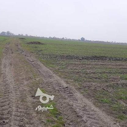 زمین کشاورزی(خشکه زاری) در گروه خرید و فروش املاک در مازندران در شیپور-عکس5