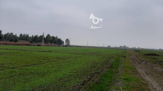زمین کشاورزی(خشکه زاری) در گروه خرید و فروش املاک در مازندران در شیپور-عکس1