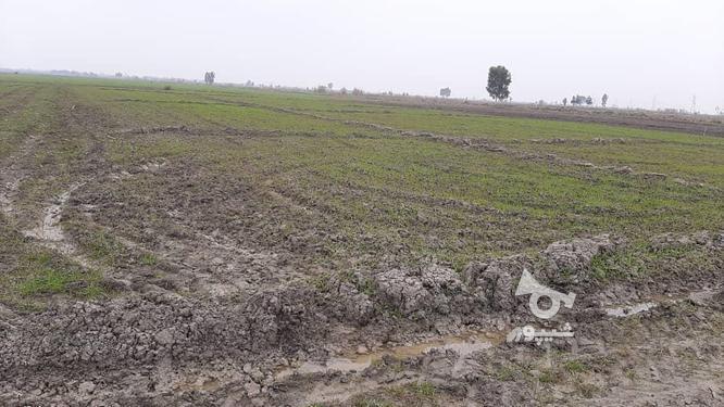 زمین کشاورزی(خشکه زاری) در گروه خرید و فروش املاک در مازندران در شیپور-عکس2