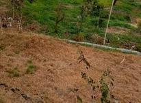 فروش زمین کشاورزی 8000 متر در آمل در شیپور-عکس کوچک