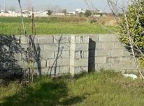 فروش زمین باغی  700 متر در آمل در شیپور-عکس کوچک