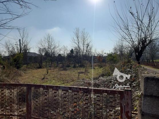 فروش زمین مسکونی 500 متر در ماسال در گروه خرید و فروش املاک در گیلان در شیپور-عکس4