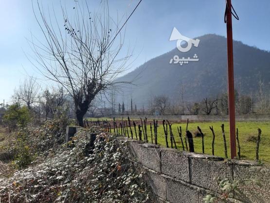 فروش زمین مسکونی 500 متر در ماسال در گروه خرید و فروش املاک در گیلان در شیپور-عکس1