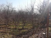 فروش باغ چهاردیواری 300 متر در شهریار در شیپور-عکس کوچک