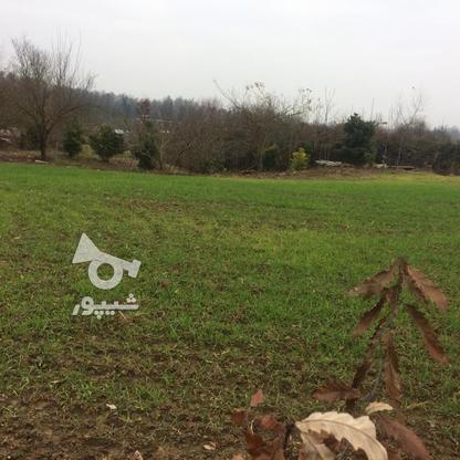 فروش زمین باغی 1700 متر در آمل در گروه خرید و فروش املاک در مازندران در شیپور-عکس4