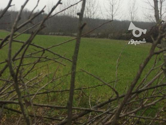 فروش زمین باغی12000 متر در آمل در گروه خرید و فروش املاک در مازندران در شیپور-عکس3